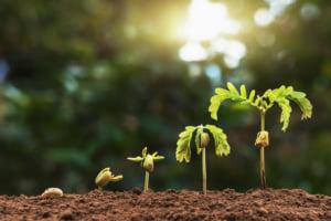 発芽と成長